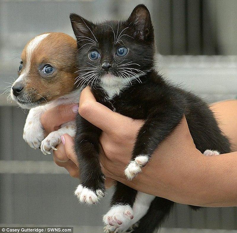 cat@dog3