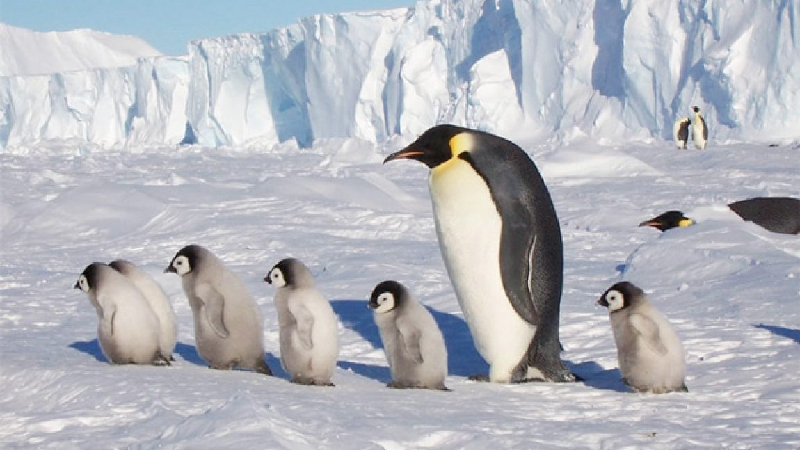Эта невероятная Антарктида