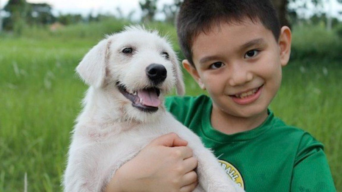 Мини-приют от юного любителя собак