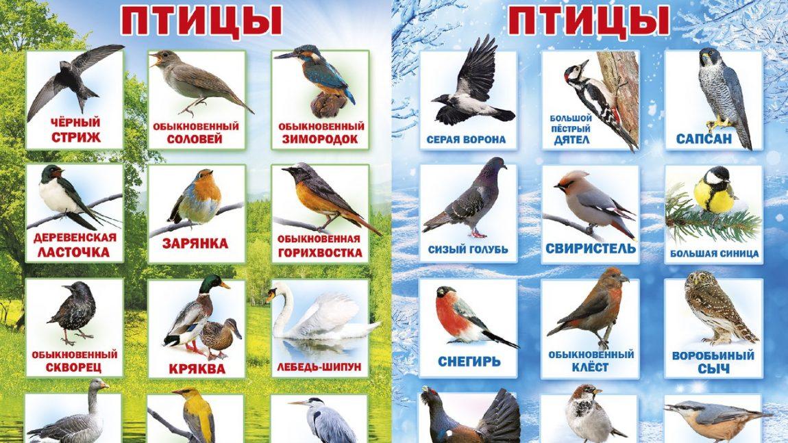 Зимующие и перелётные птицы