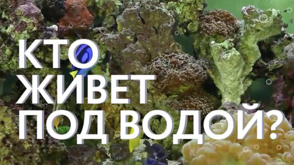 Телеканал «Смайлик» покажет морские чудеса под водой