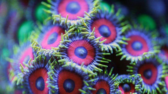 Уже завтра на «Смайлике» премьерная программа «Кораллы»