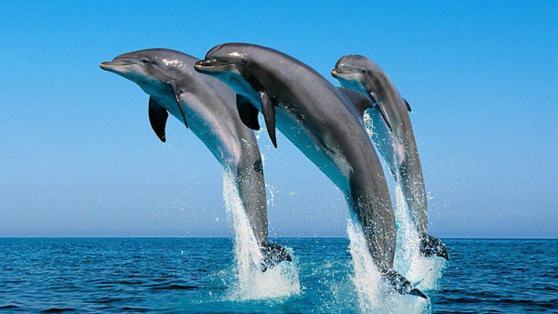 «Дельфины и киты» — на телеканале «Смайлик»