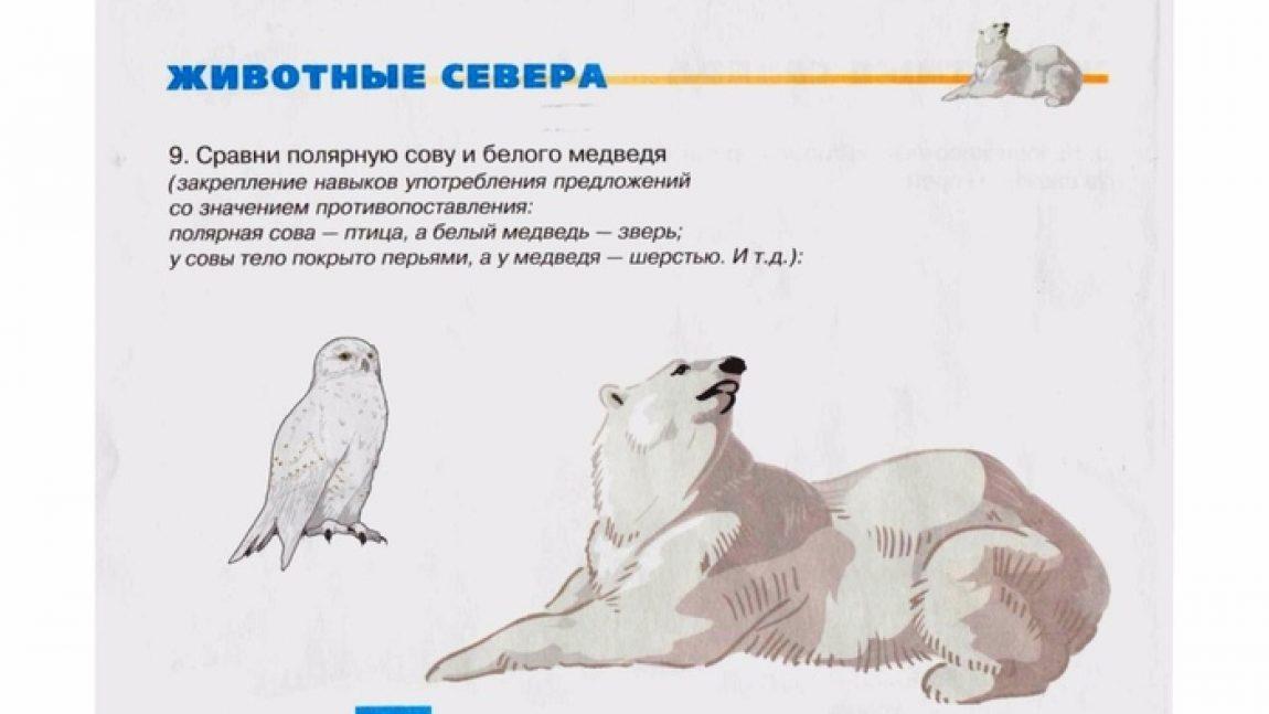 Лексическое занятие «Животные Севера»