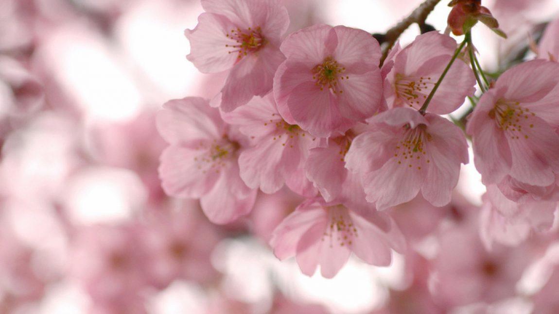 Весна: стихи, пословицы, загадки