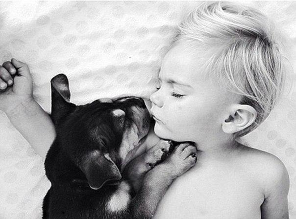 dog-boy3