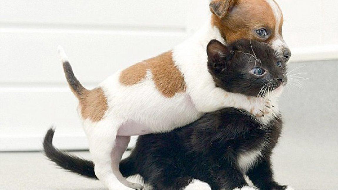Дружба, как у кошки с собакой