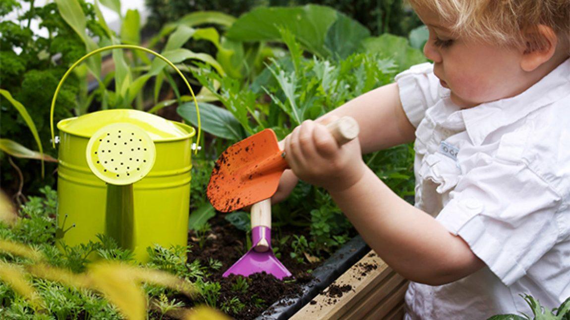 Воспитываем юного садовода
