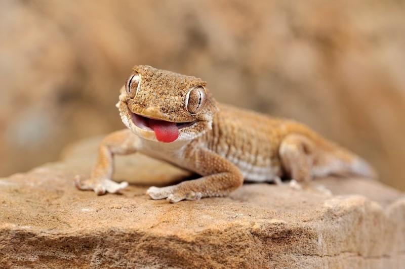 Картинки про смешных ящериц
