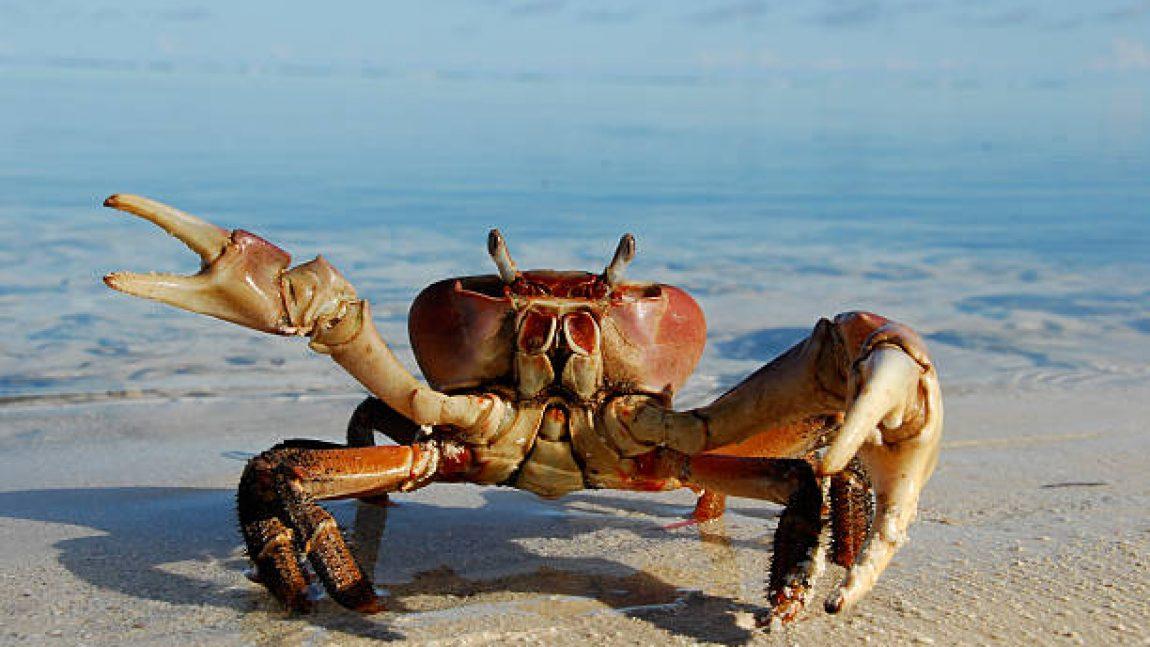 Крабы и омары в программе «Кто живёт под водой»