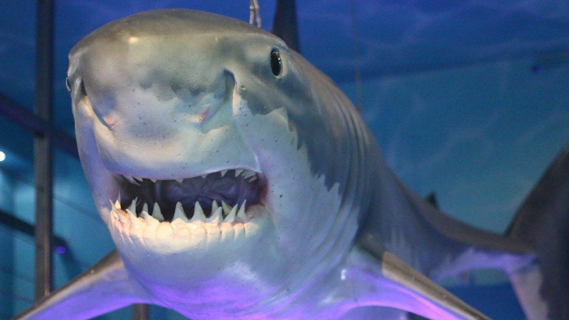 «Кто живёт под водой»: акулы