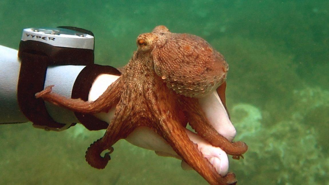Осьминожка под водой