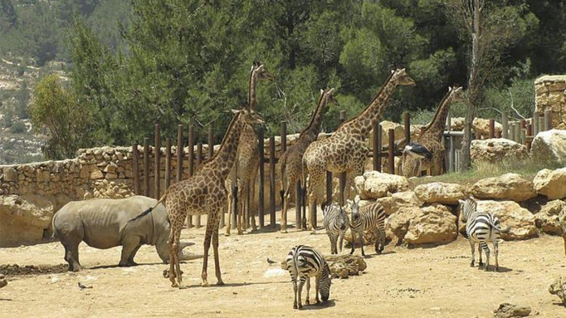Библейский зоопарк «Без чемодана»