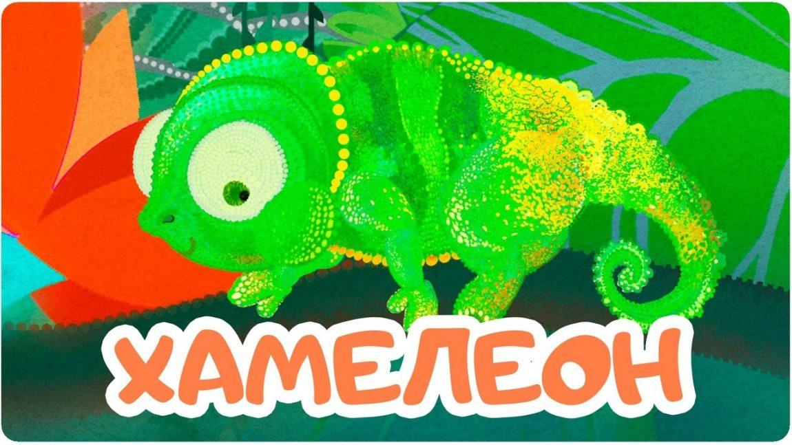 «Развивашка»: Хамелеон