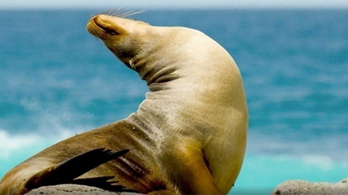 Кто живёт под водой»: тюлени