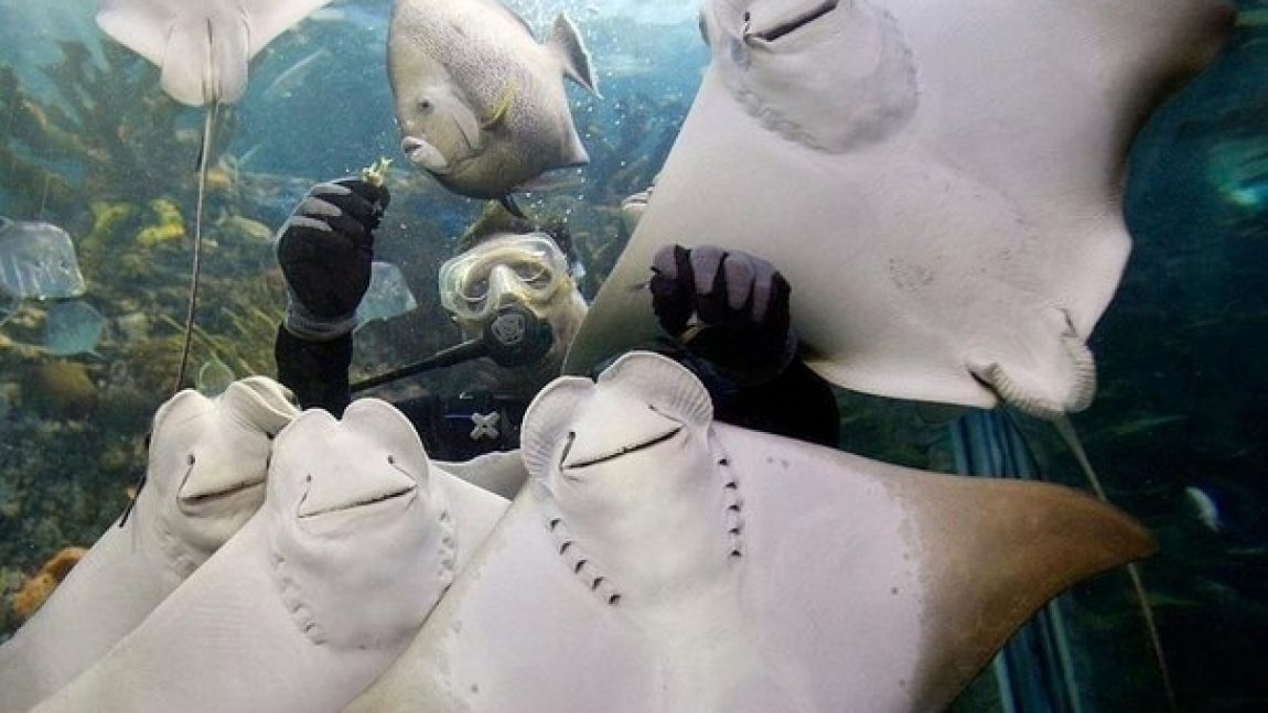«Кто живёт под водой?»: скаты