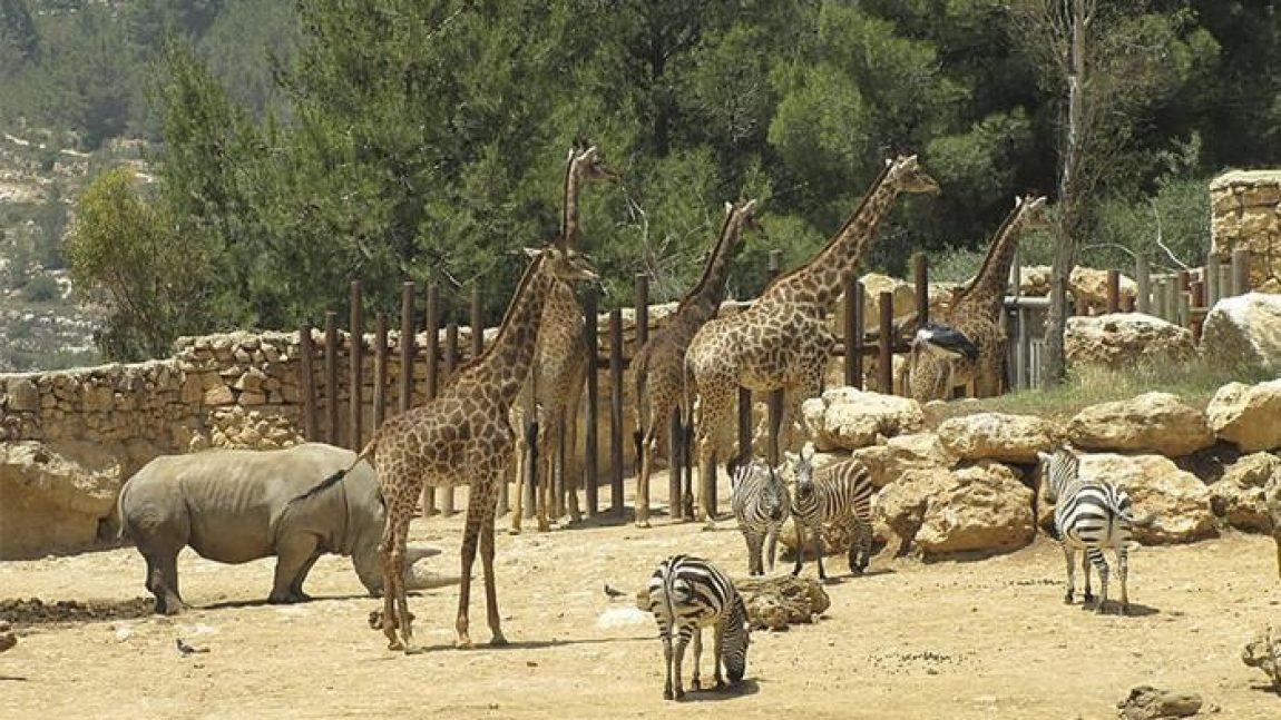 Едем «Без чемодана» в Библейский зоопарк